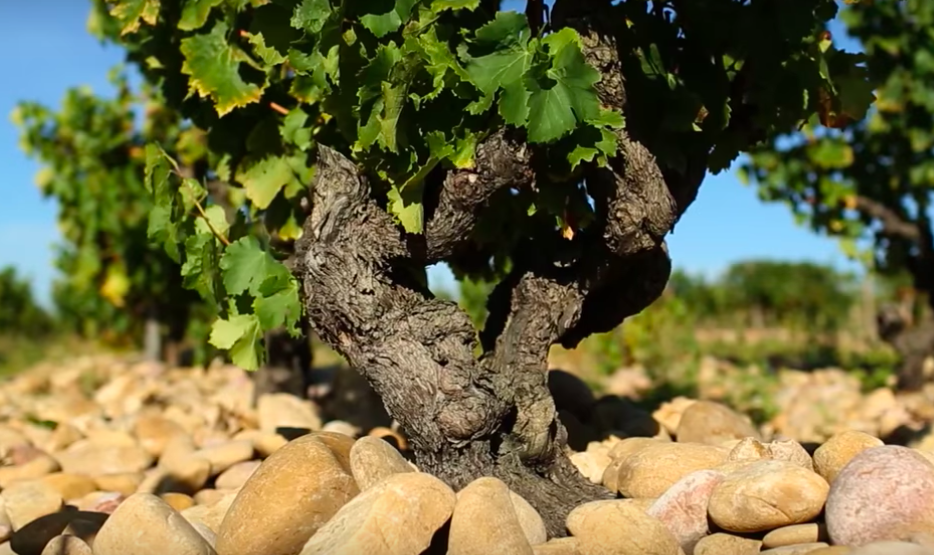 wine article Chateauneuf Du Pape