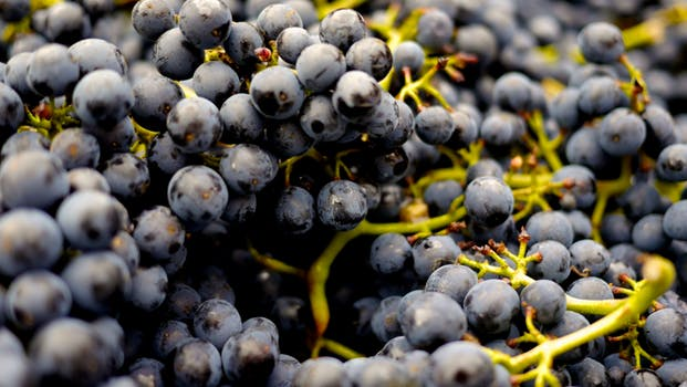 wine article Napa Vineyard Welcomes 2018 Harvest Season With Sparkling Wine