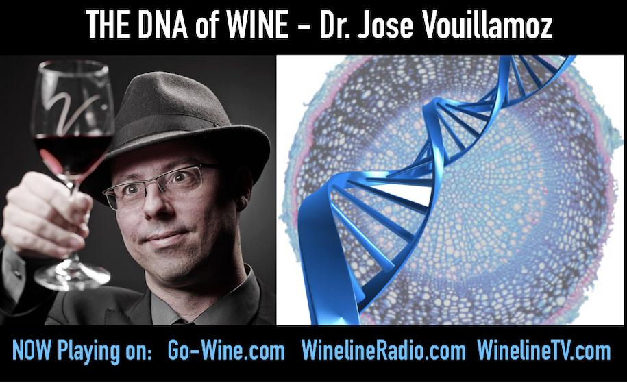 wine article Dna Unraveleld Ancient Grapes Climate Change And Rewriting The Code
