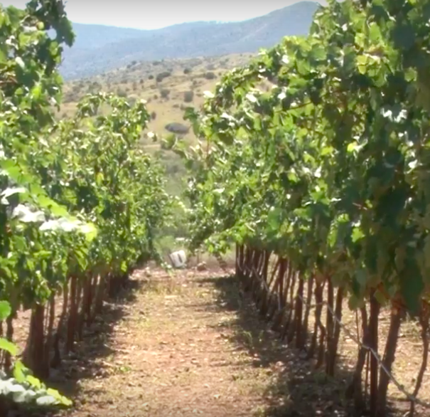 Arizona benefits as climate change alters wine production