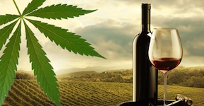 The Evidence Is Piling Up Cannabis is Bad For Wine