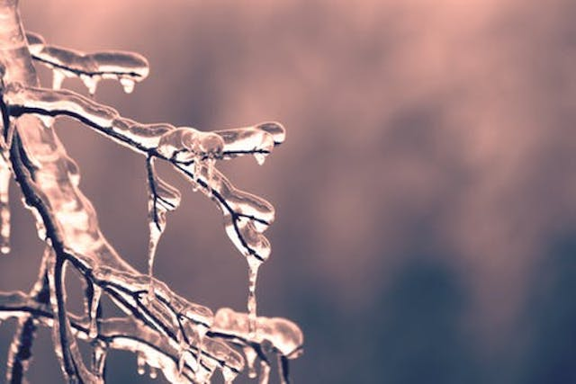 wine article Wine Country Worries Over Wintry Cold Snap